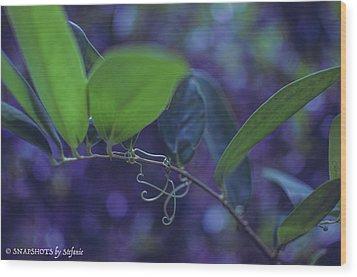 squiggle Vine Wood Print by Stefanie Silva
