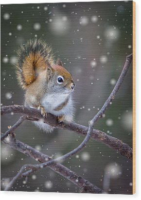 Squirrel Balancing Act Wood Print by Patti Deters