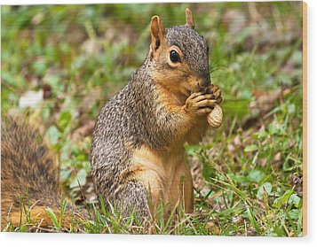 Squirrel Eating A Peanut Wood Print by James Marvin Phelps