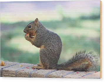 Squirrel Eating Crab Apple Wood Print by Colleen Cornelius