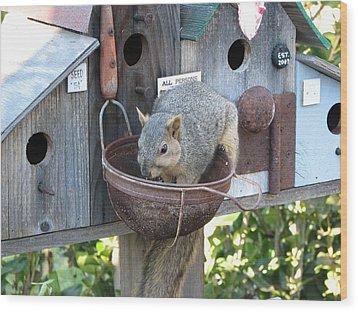 Squirrel Feeding Wood Print