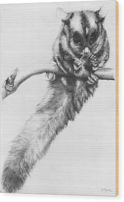Wood Print featuring the drawing Squirrel Glider by Shawna Rowe