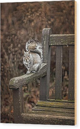 Squirrel  Wood Print by Gouzel -