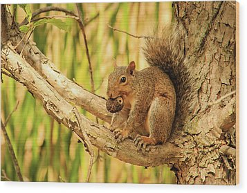 Squirrel In A Tree In The Marsh Wood Print