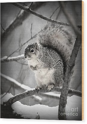 Wood Print featuring the photograph Squirrel  In The Maple Tree 2 by Lila Fisher-Wenzel