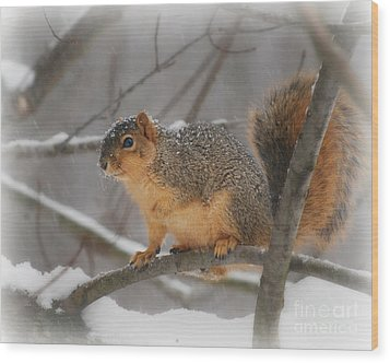 Wood Print featuring the photograph Squirrel  In The Maple Tree 3 by Lila Fisher-Wenzel