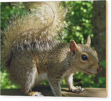 Squirrel In The Sunshine Wood Print by Rose  Hill
