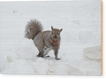 Wood Print featuring the photograph Squirrel In Winter Snow by Charline Xia