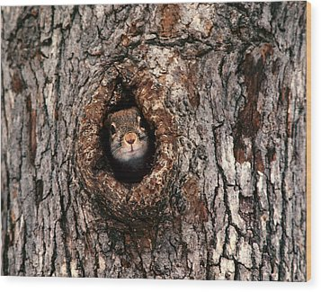 Squirrel Wood Print by Lloyd Grotjan