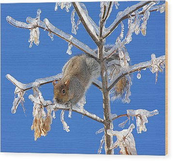 Wood Print featuring the photograph Squirrel On Icy Branches by Doris Potter