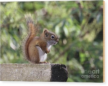 Squirrel On The Edge Wood Print by Marjorie Imbeau