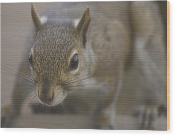 Squirrel On The Hunt Wood Print by Anthony Towers