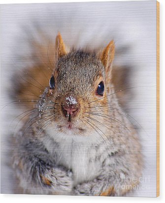 Squirrel Portrait Wood Print by Mircea Costina Photography