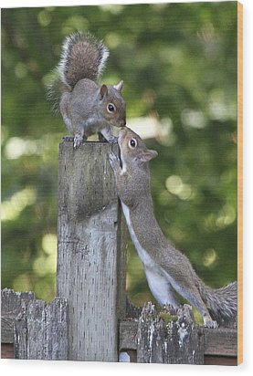 Squirrelly Affection Wood Print by Angie Vogel
