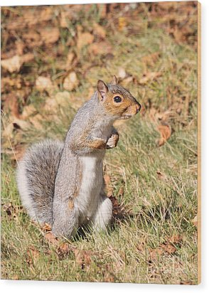 Wood Print featuring the photograph Squirrely Me by Debbie Stahre