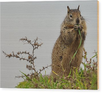 Squirrely Snacks Wood Print