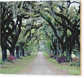 St Francisville Plantation Wood Print by Lizi Beard-Ward