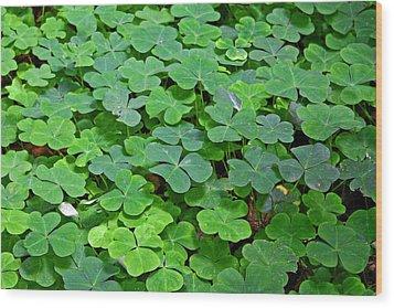 St Patricks Day Shamrocks - First Green Of Spring Wood Print by Christine Till