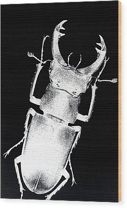 Stag Beetle Wood Print by Gabriela Insuratelu