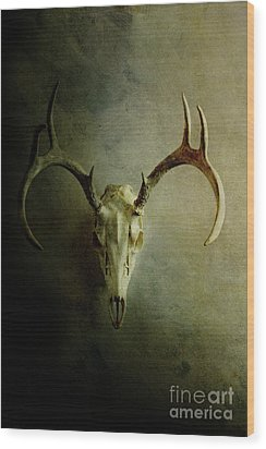 Wood Print featuring the photograph Stag Skull by Stephanie Frey