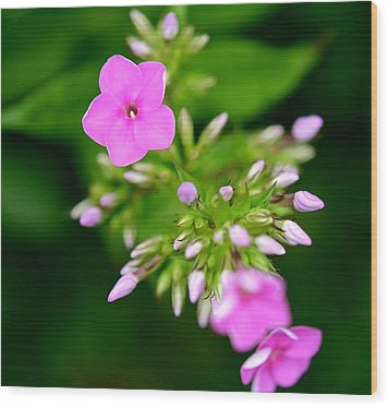 Wood Print featuring the photograph Stages Of Spring by Corinne Rhode