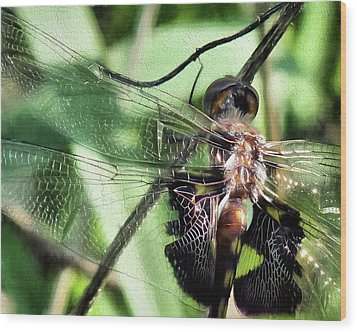 Wood Print featuring the digital art Stained Glass Dragonfly by JC Findley