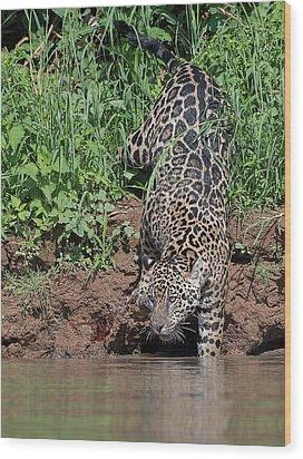 Wood Print featuring the photograph Stalking Jaguar by Wade Aiken