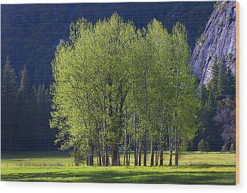 Stand Of Trees Yosemite Valley Wood Print by Garry Gay