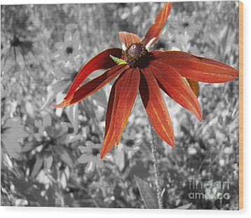 Stand Out  Wood Print by Cathy  Beharriell