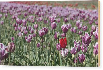 Standing Out In A Crowd Wood Print by Nick Gustafson
