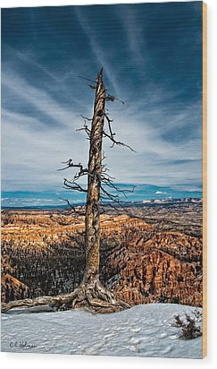 Standing Regardless Wood Print by Christopher Holmes