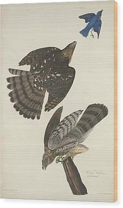 Stanley Hawk Wood Print by Anton Oreshkin