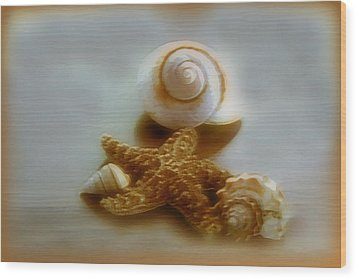 Star And Shells Wood Print by Linda Sannuti