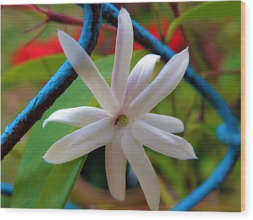 Star Jasmine Flower Wood Print by Rose  Hill