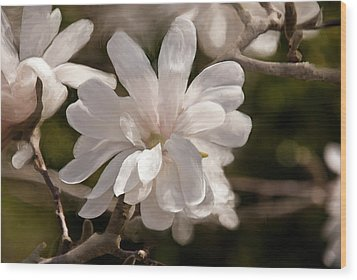 Star Magnolia Painting Wood Print by Don  Wright