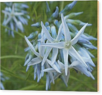Star-spangled Flowers Wood Print