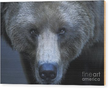 Stare Down Wood Print by Sandra Bronstein