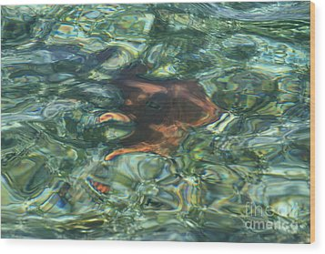 Wood Print featuring the photograph Starfish Abstract by Edward R Wisell