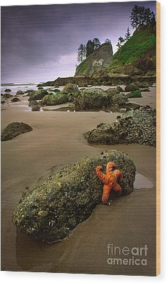 Starfish On The Rocks Wood Print by Inge Johnsson