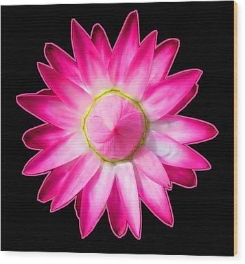 Starflower Opening  Mandala Wood Print