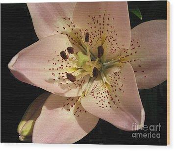 Stargazer Lily Wood Print by Linda Vespasian