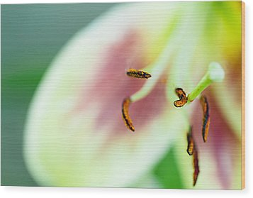 Stargazer Lily Wood Print by Marlo Horne