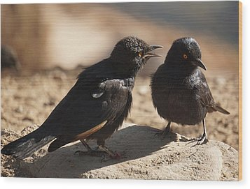 Starling Discussion. Wood Print
