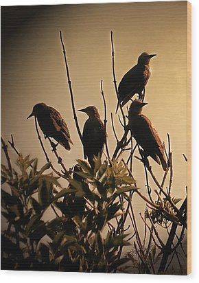 Starlings Wood Print by Sharon Lisa Clarke