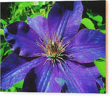 Wood Print featuring the photograph Starry Bloom by Susan Carella