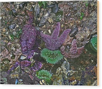 Stars And Anemones Wood Print by Wilbur Young