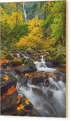 Starvation Creek Falls Wood Print by Patricia Davidson