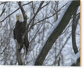 Starved Rock Eagle Wood Print