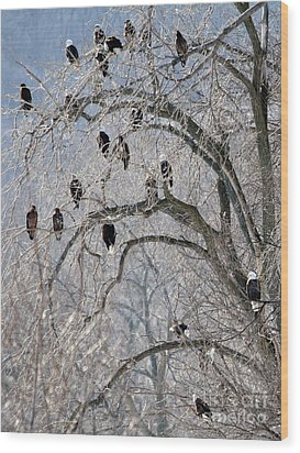 Starved Rock Eagles Wood Print