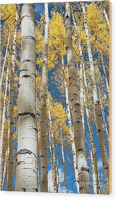 Wood Print featuring the photograph Stately Aspens by The Forests Edge Photography - Diane Sandoval